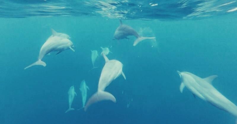 Lumba lumba di Laut Ujung Barat Indonesia